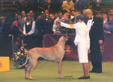 harley showing in the group at westminster